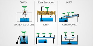 Know-About-Hydroponics-2